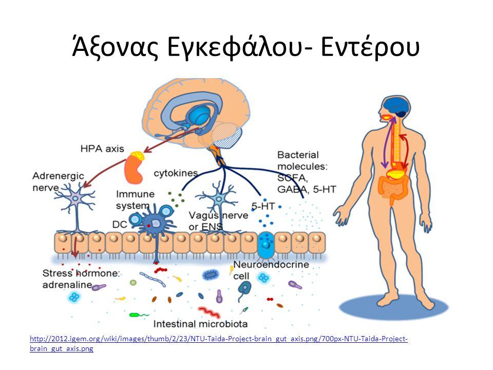 Άξονας Εγκεφάλου- Εντέρου http://2012.igem.org/wiki/images/thumb/2/23/NTU-Taida-Project-brain_gut_axis.png/700px-NTU-Taida-Project- brain_gut_axis.png