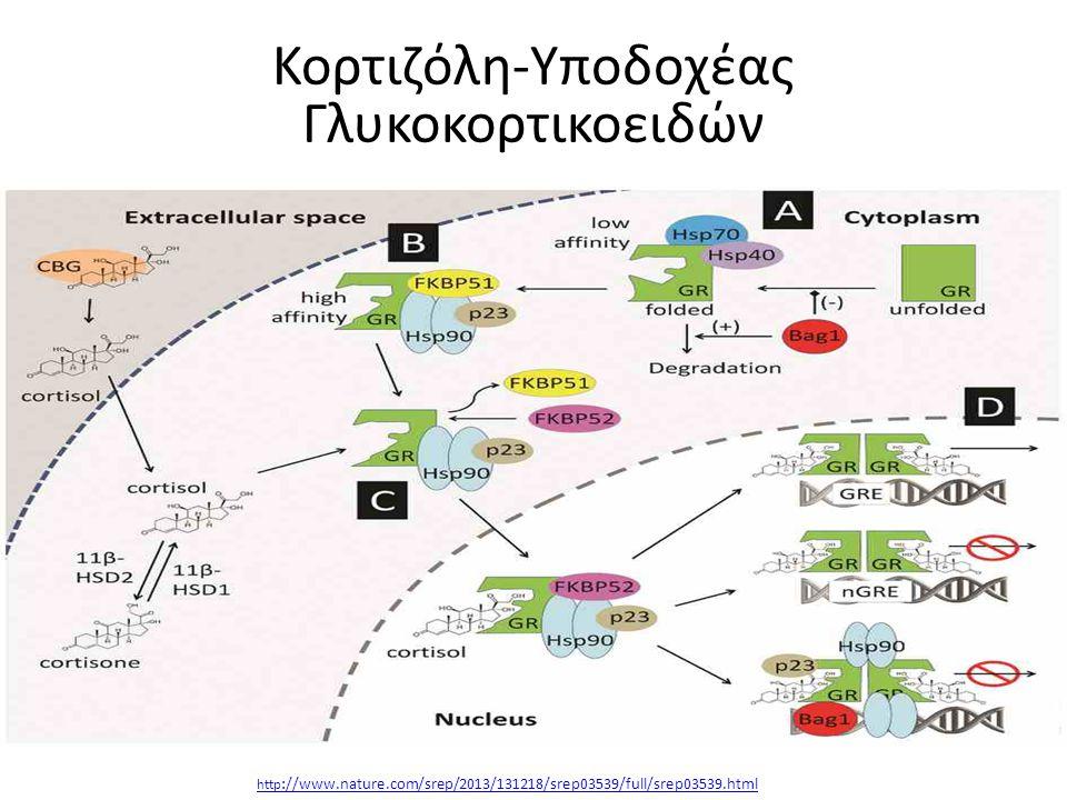http ://www.nature.com/srep/2013/131218/srep03539/full/srep03539.html Κορτιζόλη-Υποδοχέας Γλυκοκορτικοειδών