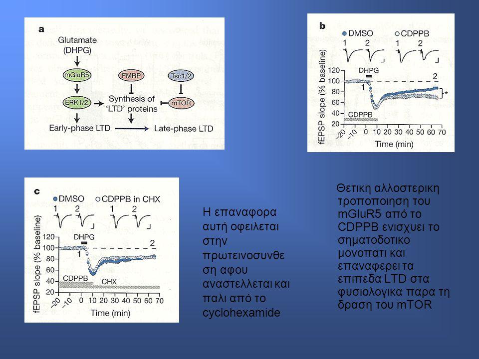 Θετικη αλλοστερικη τροποποιηση του mGluR5 από το CDPPB ενισχυει το σηματοδοτικο μονοπατι και επαναφερει τα επιπεδα LTD στα φυσιολογικα παρα τη δραση του mTOR Η επαναφορα αυτή οφειλεται στην πρωτεινοσυνθε ση αφου αναστελλεται και παλι από το cyclohexamide