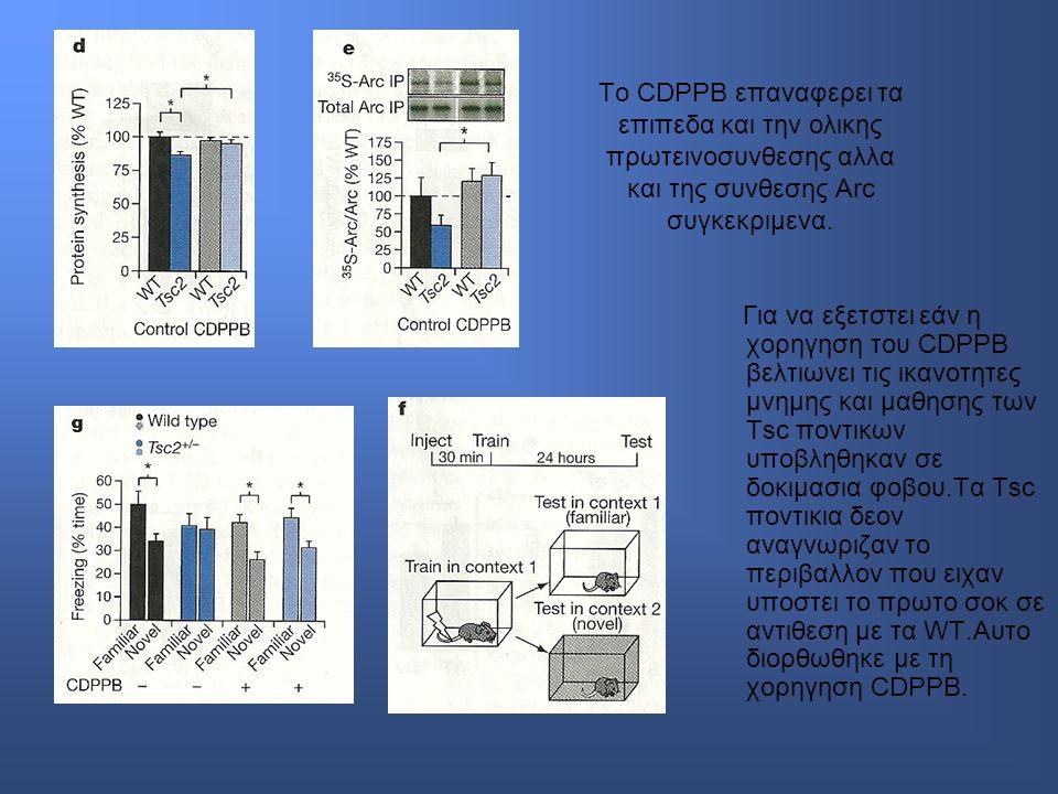 To CDPPB επαναφερει τα επιπεδα και την ολικης πρωτεινοσυνθεσης αλλα και της συνθεσης Arc συγκεκριμενα.