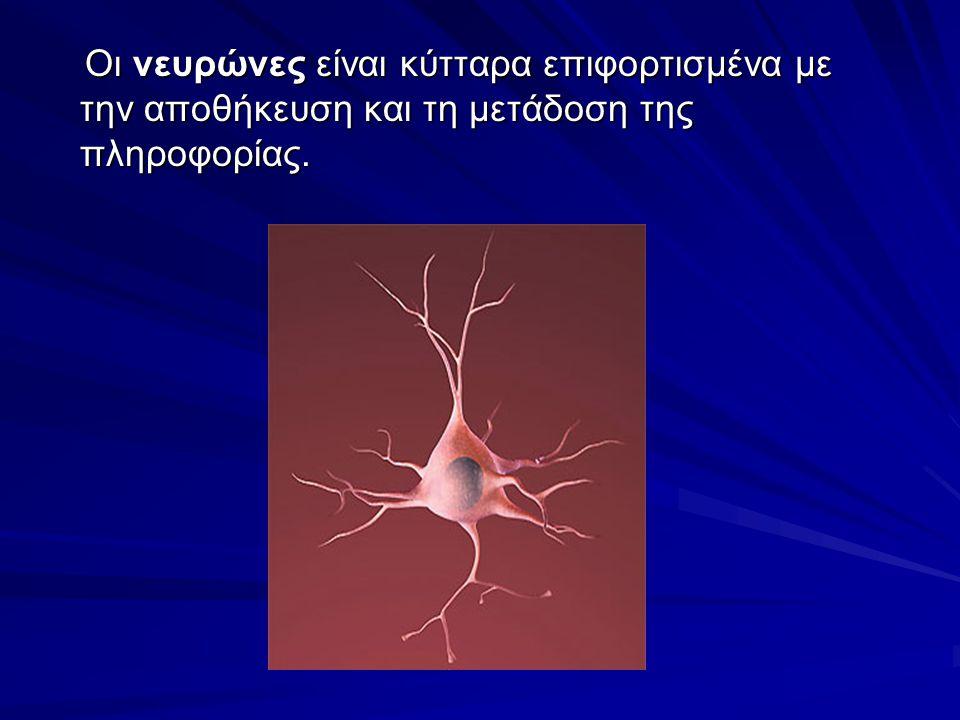 """(Ν) Νευρώνες : κύτταρα του Νευρικού Συστήματος επιφορτισμένα με την αποθήκευση και την μετάδοση της πληροφορίας. (Α) αστροκύτταρα: σχηματίζουν μία """"κε"""