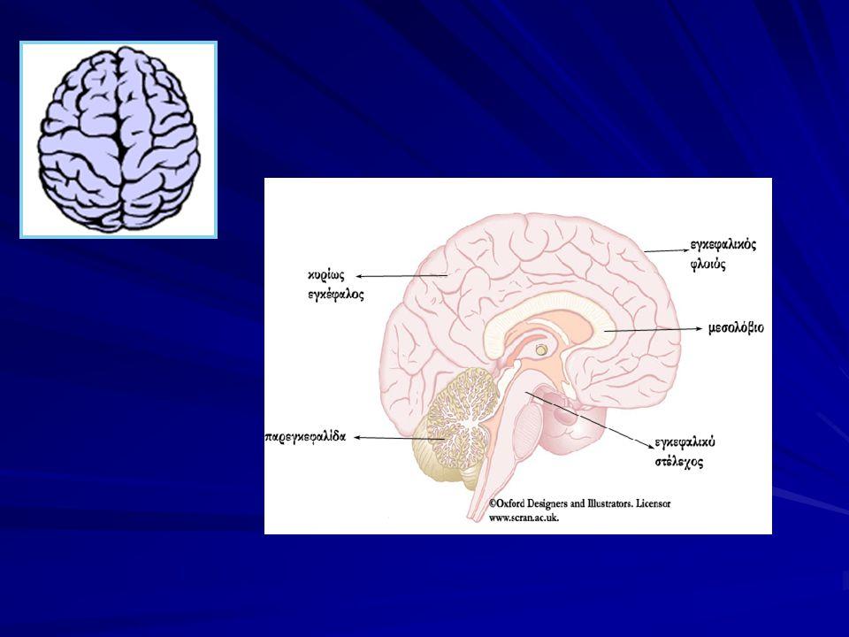 Δομή του εγκεφάλου Ο εγκέφαλος αποτελείται από το στέλεχος, την παρεγκεφαλίδα και τα δυο εγκεφαλικά ημισφαίρια. Ο εγκέφαλος αποτελείται από το στέλεχο