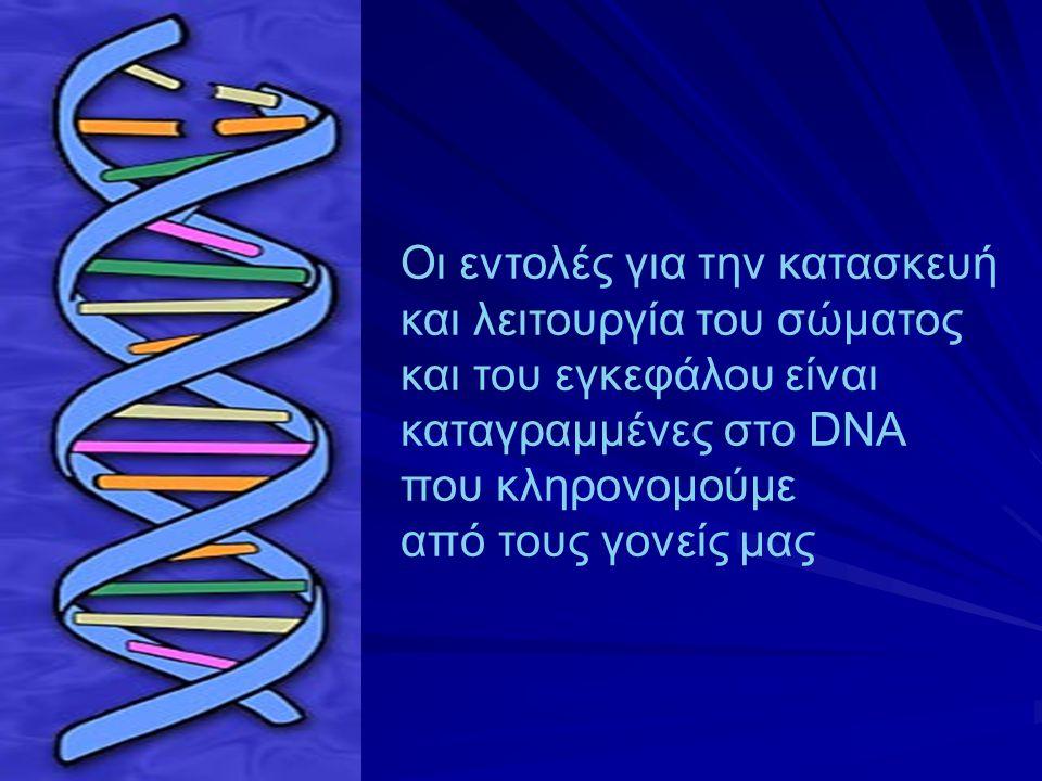 «Μέσα στο κρανίο μας, 100 δισεκατομμύρια νευρώνες συνομιλούν ακατάπαυστα μεταξύ τους μέσω τρισεκατομμυρίων συνάψεων και είναι οργανωμένοι σε νευρωνικά