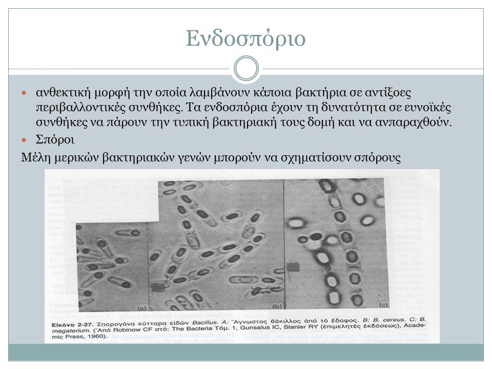 Ενδοσπόριο ανθεκτική μορφή την οποία λαμβάνουν κάποια βακτήρια σε αντίξοες περιβαλλοντικές συνθήκες.