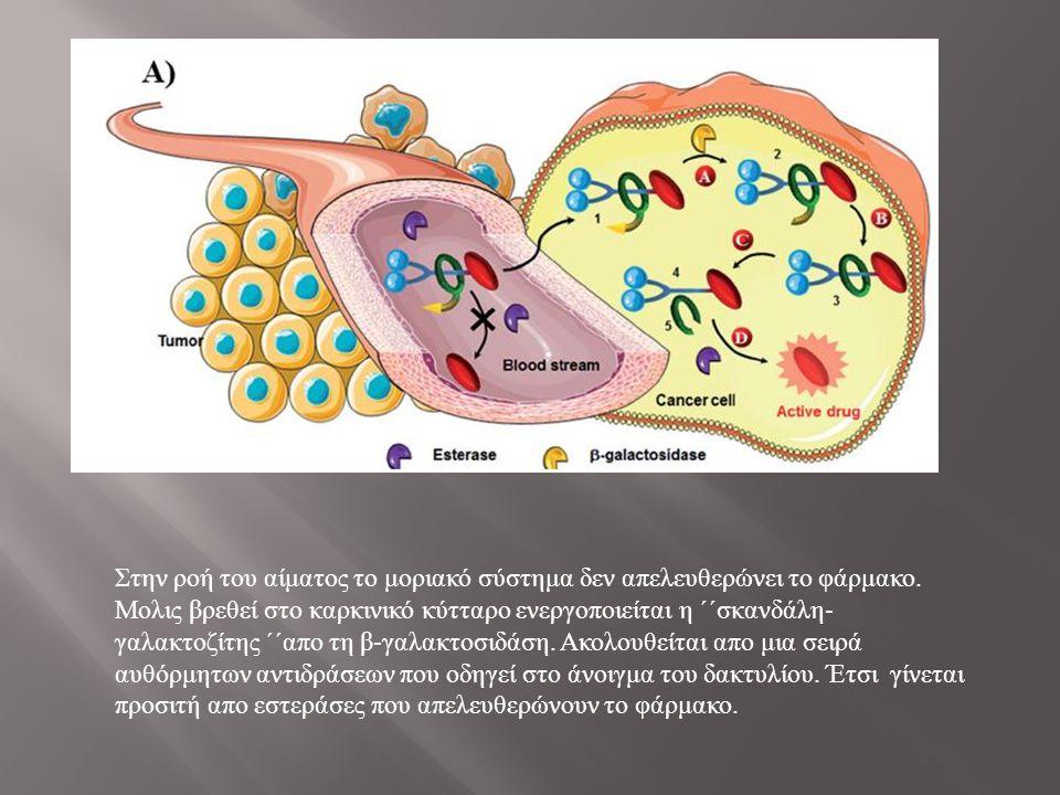 Στην ροή του αίματος το μοριακό σύστημα δεν απελευθερώνει το φάρμακο. Μολις βρεθεί στο καρκινικό κύτταρο ενεργοποιείται η ΄΄σκανδάλη - γαλακτοζίτης ΄΄