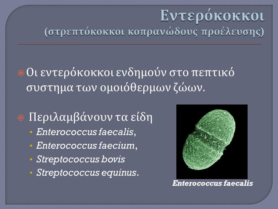  Οι εντερόκοκκοι ενδημούν στο πεπτικό συστημα των ομοιόθερμων ζώων.  Περιλαμβάνουν τα είδη Enterococcus faecalis, Enterococcus faecium, Streptococcu