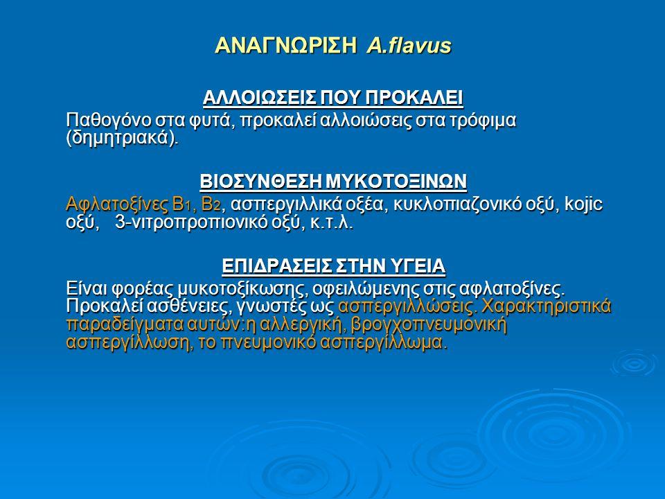 ΑΝΑΓΝΩΡΙΣΗ A.flavus ΑΛΛΟΙΩΣΕΙΣ ΠΟΥ ΠΡΟΚΑΛΕΙ Παθογόνο στα φυτά, προκαλεί αλλοιώσεις στα τρόφιμα (δημητριακά). ΒΙΟΣΥΝΘΕΣΗ ΜΥΚΟΤΟΞΙΝΩΝ Αφλατοξίνες Β 1, Β