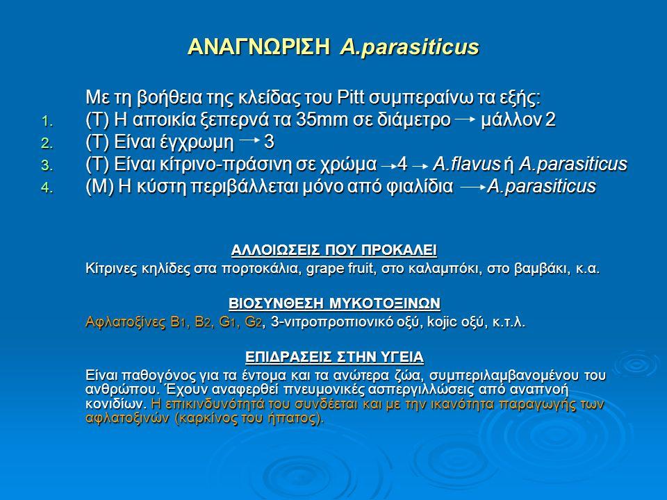 ΑΝΑΓΝΩΡΙΣΗ A.parasiticus Με τη βοήθεια της κλείδας του Pitt συμπεραίνω τα εξής: 1. (Τ) Η αποικία ξεπερνά τα 35mm σε διάμετρο μάλλον 2 2. (Τ) Είναι έγχ