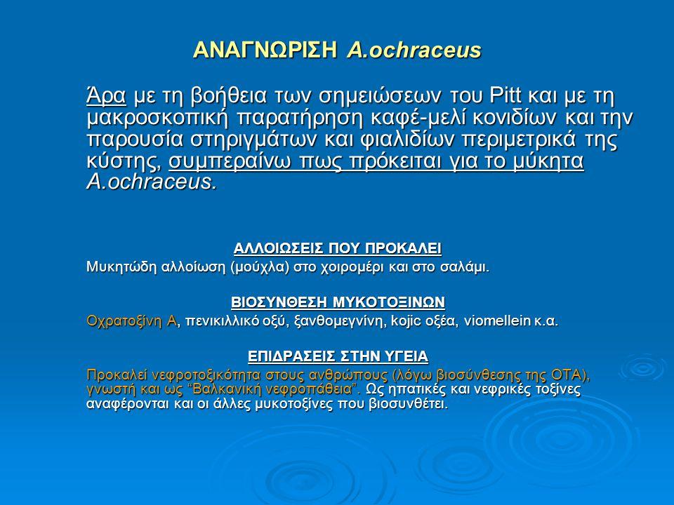 ΑΝΑΓΝΩΡΙΣΗ A.ochraceus Άρα με τη βοήθεια των σημειώσεων του Pitt και με τη μακροσκοπική παρατήρηση καφέ-μελί κονιδίων και την παρουσία στηριγμάτων και