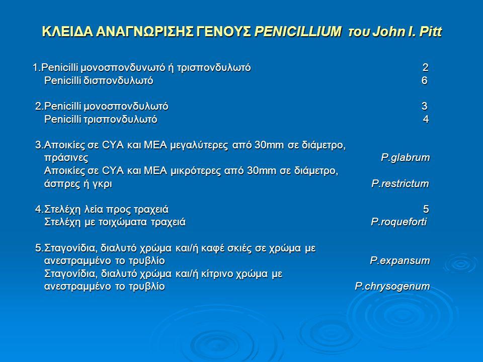 ΚΛΕΙΔΑ ΑΝΑΓΝΩΡΙΣΗΣ ΓΕΝΟΥΣ PENICILLIUM του John I. Pitt 1.Penicilli μονοσπονδυνωτό ή τρισπονδυλωτό 2 1.Penicilli μονοσπονδυνωτό ή τρισπονδυλωτό 2 Penic