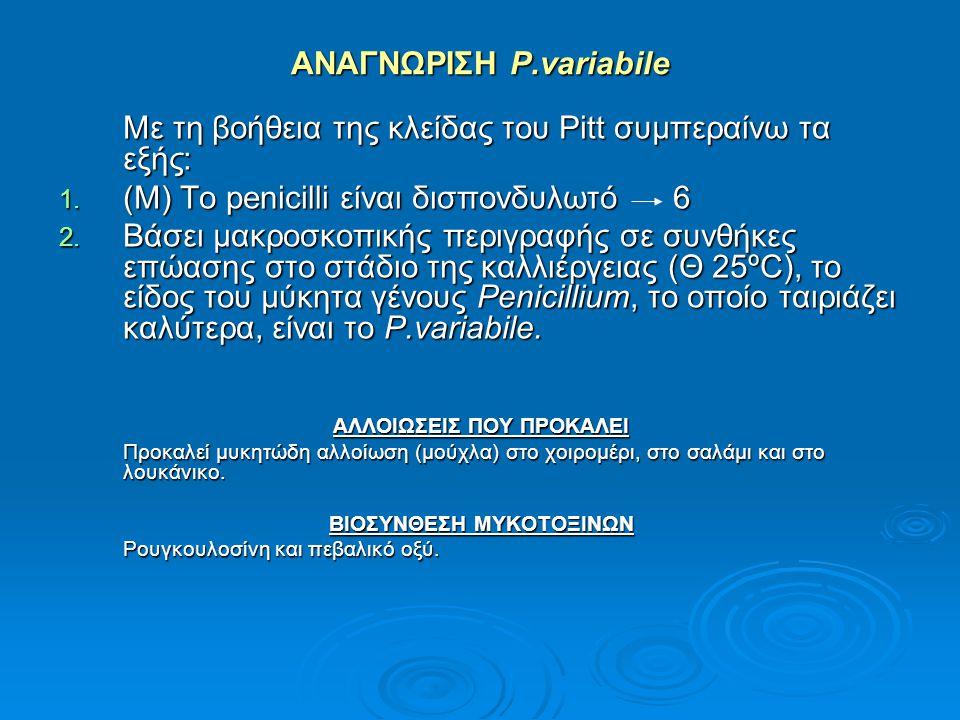 ΑΝΑΓΝΩΡΙΣΗ P.variabile Με τη βοήθεια της κλείδας του Pitt συμπεραίνω τα εξής: 1. (Μ) Το penicilli είναι δισπονδυλωτό 6 2. Βάσει μακροσκοπικής περιγραφ