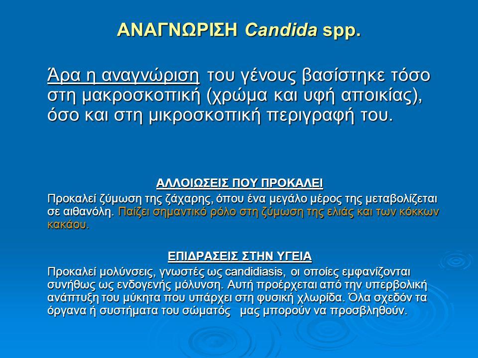 ΑΝΑΓΝΩΡΙΣΗ Candida spp. Άρα η αναγνώριση του γένους βασίστηκε τόσο στη μακροσκοπική (χρώμα και υφή αποικίας), όσο και στη μικροσκοπική περιγραφή του.
