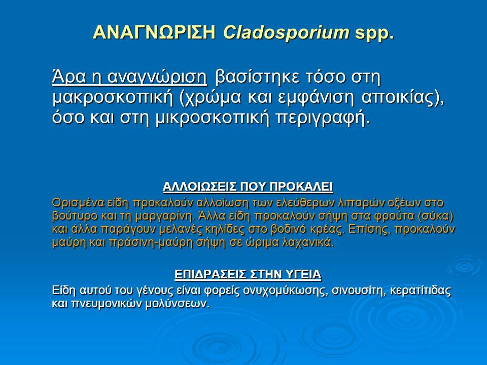 ΑΝΑΓΝΩΡΙΣΗ Cladosporium spp. Άρα η αναγνώριση βασίστηκε τόσο στη μακροσκοπική (χρώμα και εμφάνιση αποικίας), όσο και στη μικροσκοπική περιγραφή. ΑΛΛΟΙ