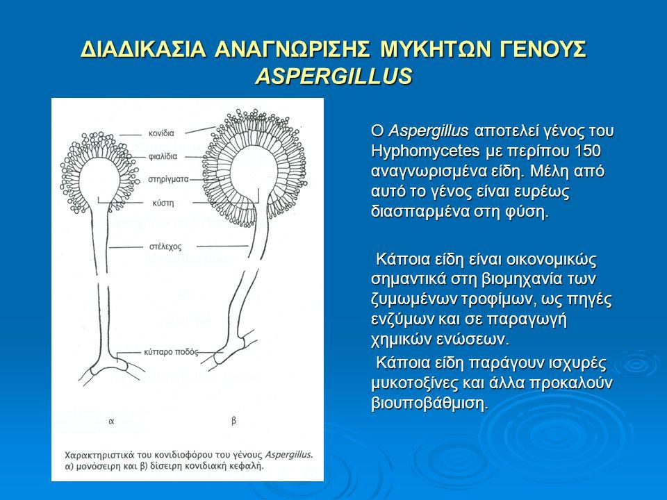 ΔΙΑΔΙΚΑΣΙΑ ΑΝΑΓΝΩΡΙΣΗΣ ΜΥΚΗΤΩΝ ΓΕΝΟΥΣ ASPERGILLUS Ο Aspergillus αποτελεί γένος του Hyphomycetes με περίπου 150 αναγνωρισμένα είδη. Μέλη από αυτό το γέ