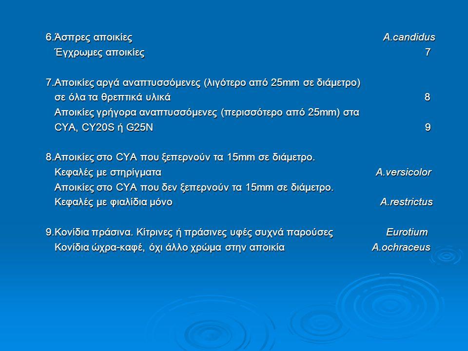 ΑΝΑΓΝΩΡΙΣΗ Eurotium Link Άρα η αναγνώριση βασίστηκε κυρίως στη μικροσκοπική περιγραφή και στην οικολογία του γένους Eurotium.