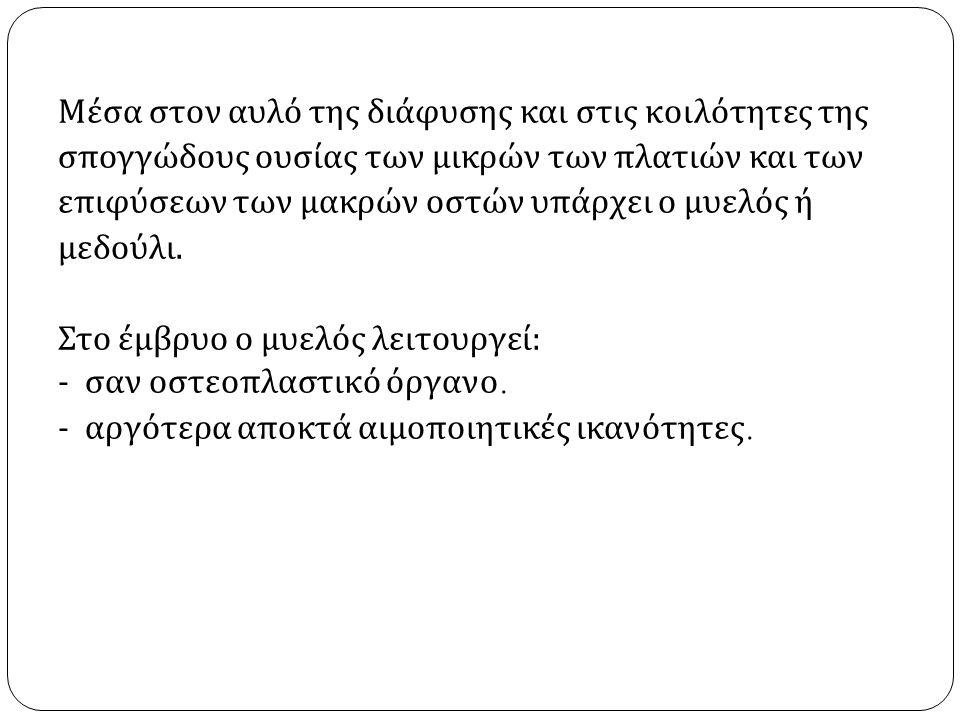 Τοπογραφικά ο σκελετός του ανθρώπου χωρίζεται : α ) Σκελετός της κεφαλής.