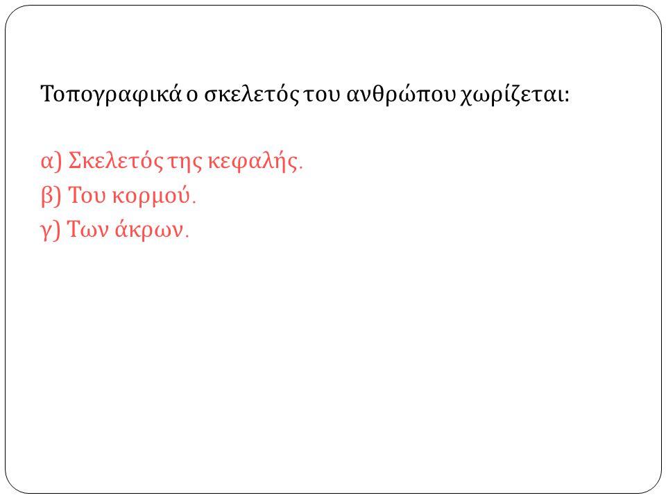 Τοπογραφικά ο σκελετός του ανθρώπου χωρίζεται : α ) Σκελετός της κεφαλής. β ) Του κορμού. γ ) Των άκρων.