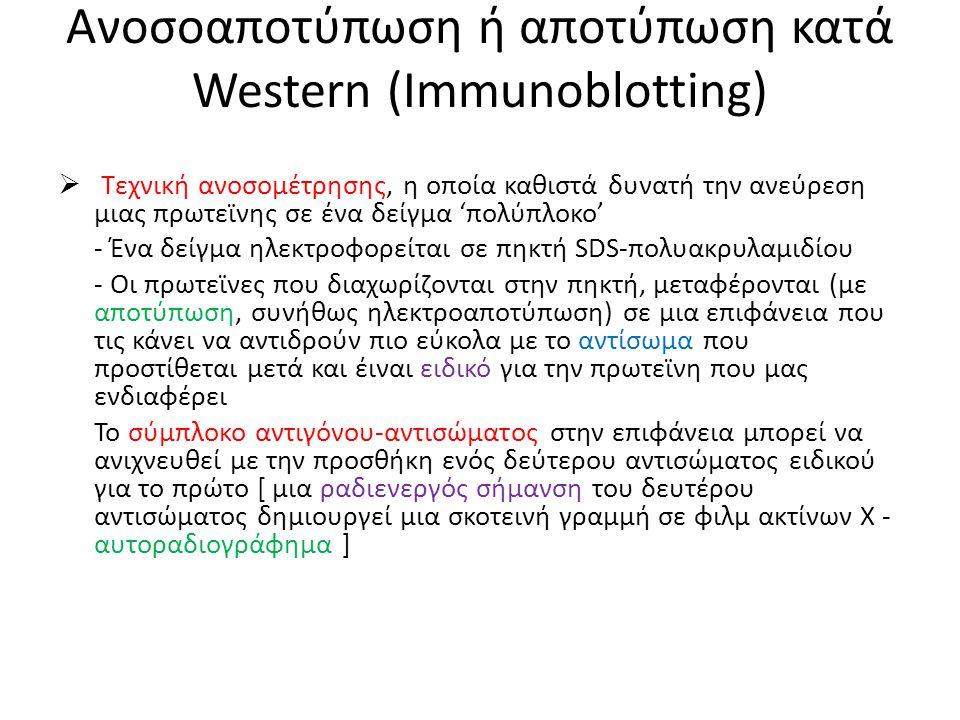 Ανοσοαποτύπωση ή αποτύπωση κατά Western (Immunoblotting)  Τεχνική ανοσομέτρησης, η οποία καθιστά δυνατή την ανεύρεση μιας πρωτεϊνης σε ένα δείγμα 'πολύπλοκο' - Ένα δείγμα ηλεκτροφορείται σε πηκτή SDS-πολυακρυλαμιδίου - Οι πρωτεϊνες που διαχωρίζονται στην πηκτή, μεταφέρονται (με αποτύπωση, συνήθως ηλεκτροαποτύπωση) σε μια επιφάνεια που τις κάνει να αντιδρούν πιο εύκολα με το αντίσωμα που προστίθεται μετά και έιναι ειδικό για την πρωτεϊνη που μας ενδιαφέρει Το σύμπλοκο αντιγόνου-αντισώματος στην επιφάνεια μπορεί να ανιχνευθεί με την προσθήκη ενός δεύτερου αντισώματος ειδικού για το πρώτο [ μια ραδιενεργός σήμανση του δευτέρου αντισώματος δημιουργεί μια σκοτεινή γραμμή σε φιλμ ακτίνων Χ - αυτοραδιογράφημα ]