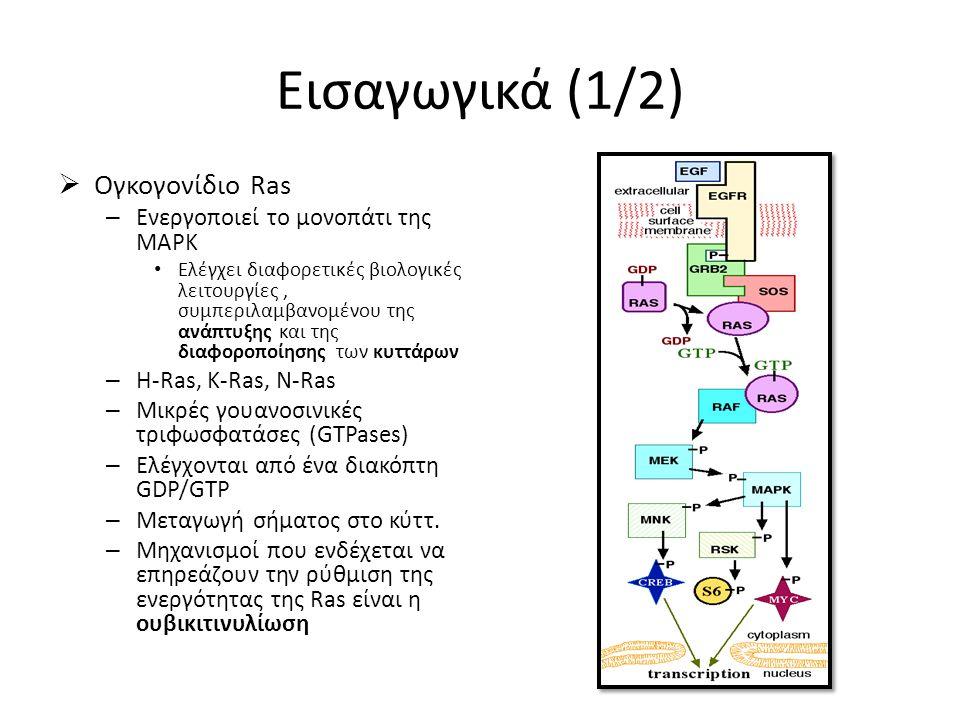 Εισαγωγικά (1/2)  Ογκογονίδιο Ras – Ενεργοποιεί το μονοπάτι της MAPK Eλέγχει διαφορετικές βιολογικές λειτουργίες, συμπεριλαμβανομένου της ανάπτυξης και της διαφοροποίησης των κυττάρων – H-Ras, K-Ras, N-Ras – Μικρές γουανοσινικές τριφωσφατάσες (GTPases) – Ελέγχονται από ένα διακόπτη GDP/GTP – Μεταγωγή σήματος στο κύττ.