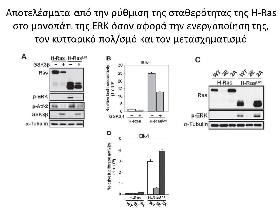 Αποτελέσματα από την ρύθμιση της σταθερότητας της H-Ras στο μονοπάτι της ERK όσον αφορά την ενεργοποίηση της, τον κυτταρικό πολ/σμό και τον μετασχηματισμό