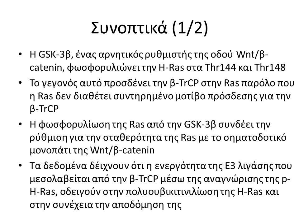 Συνοπτικά (1/2) Η GSK-3β, ένας αρνητικός ρυθμιστής της οδού Wnt/β- catenin, φωσφορυλιώνει την H-Ras στα Thr144 και Thr148 Το γεγονός αυτό προσδένει την β-TrCP στην Ras παρόλο που η Ras δεν διαθέτει συντηρημένο μοτίβο πρόσδεσης για την β-TrCP H φωσφορυλίωση της Ras από την GSK-3β συνδέει την ρύθμιση για την σταθερότητα της Ras με το σηματοδοτικό μονοπάτι της Wnt/β-catenin Τα δεδομένα δέιχνουν ότι η ενεργότητα της Ε3 λιγάσης που μεσολαβείται από την β-TrCP μέσω της αναγνώρισης της p- H-Ras, οδειγούν στην πολυουβικιτινιλίωση της H-Ras και στην συνέχεια την αποδόμηση της