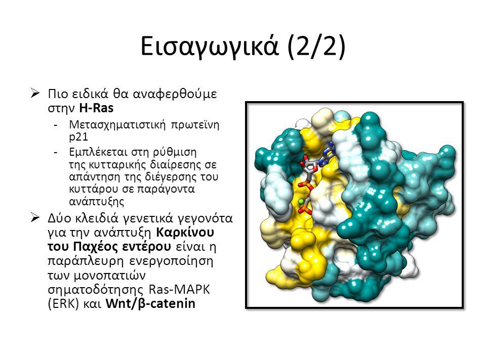 Εισαγωγικά (2/2)  Πιο ειδικά θα αναφερθούμε στην H-Ras -Μετασχηματιστική πρωτεϊνη p21 -Eμπλέκεται στη ρύθμιση της κυτταρικής διαίρεσης σε απάντηση της διέγερσης του κυττάρου σε παράγοντα ανάπτυξης  Δύο κλειδιά γενετικά γεγονότα για την ανάπτυξη Καρκίνου του Παχέος εντέρου είναι η παράπλευρη ενεργοποίηση των μονοπατιών σηματοδότησης Ras-MAPK (ERK) και Wnt/β-catenin