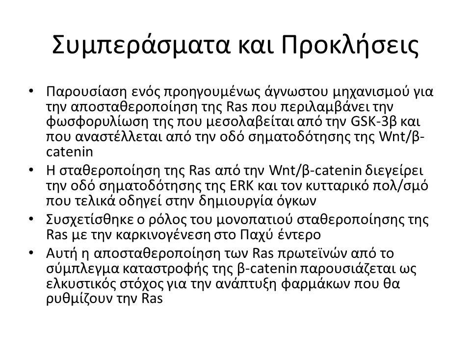 Συμπεράσματα και Προκλήσεις Παρουσίαση ενός προηγουμένως άγνωστου μηχανισμού για την αποσταθεροποίηση της Ras που περιλαμβάνει την φωσφορυλίωση της που μεσολαβείται από την GSK-3β και που αναστέλλεται από την οδό σηματοδότησης της Wnt/β- catenin Η σταθεροποίηση της Ras από την Wnt/β-catenin διεγείρει την οδό σηματοδότησης της ERK και τον κυτταρικό πολ/σμό που τελικά οδηγεί στην δημιουργία όγκων Συσχετίσθηκε ο ρόλος του μονοπατιού σταθεροποίησης της Ras με την καρκινογένεση στο Παχύ έντερο Αυτή η αποσταθεροποίηση των Ras πρωτεϊνών από το σύμπλεγμα καταστροφής της β-catenin παρουσιάζεται ως ελκυστικός στόχος για την ανάπτυξη φαρμάκων που θα ρυθμίζουν την Ras