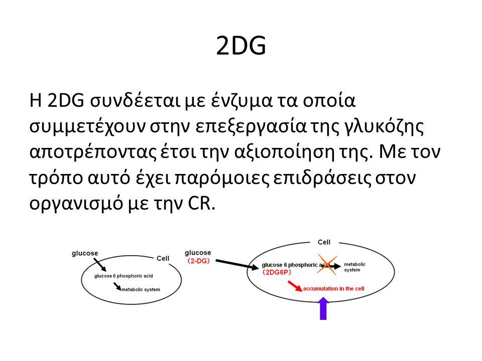 2DG Η 2DG συνδέεται με ένζυμα τα οποία συμμετέχουν στην επεξεργασία της γλυκόζης αποτρέποντας έτσι την αξιοποίηση της.