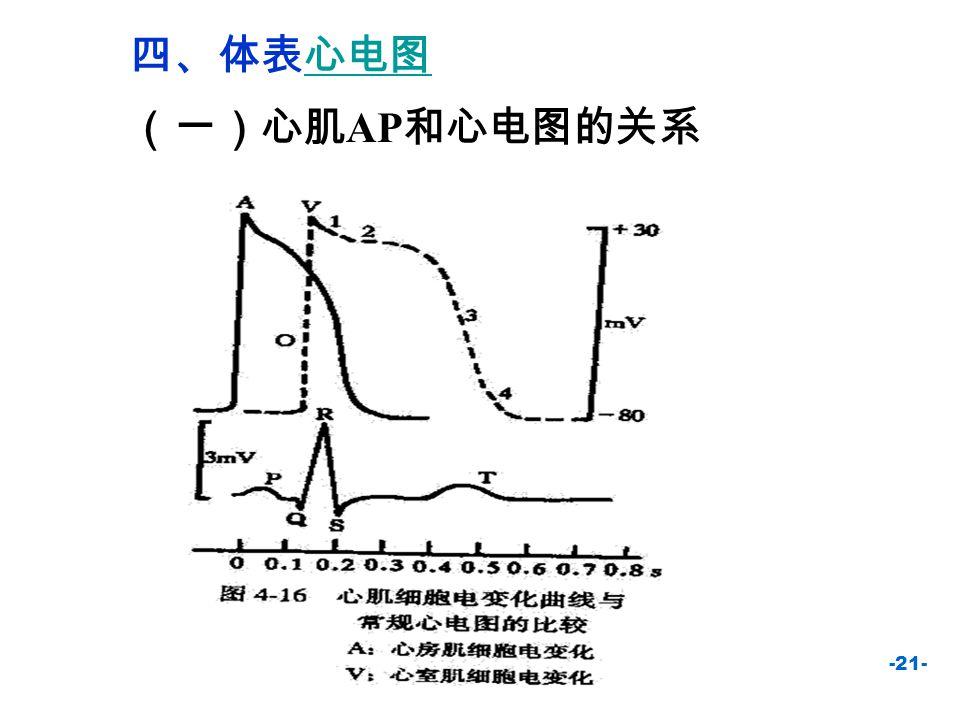 -22- P 波:心房去极化波 QRS 波:心室去极化波 T 波:心室复极化波 PR 间期:心房  到心室  ST 段: 表示心室已全部去极化 QT 间期:表示心室肌去极化与 复极化总时间 P波P波 Q S R T波T波 (二)正常心电图的波形及生理意义