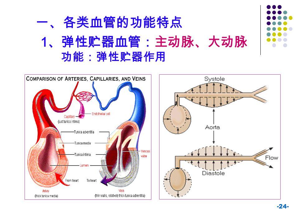 -24- 1 、弹性贮器血管:主动脉、大动脉 功能:弹性贮器作用 一、各类血管的功能特点