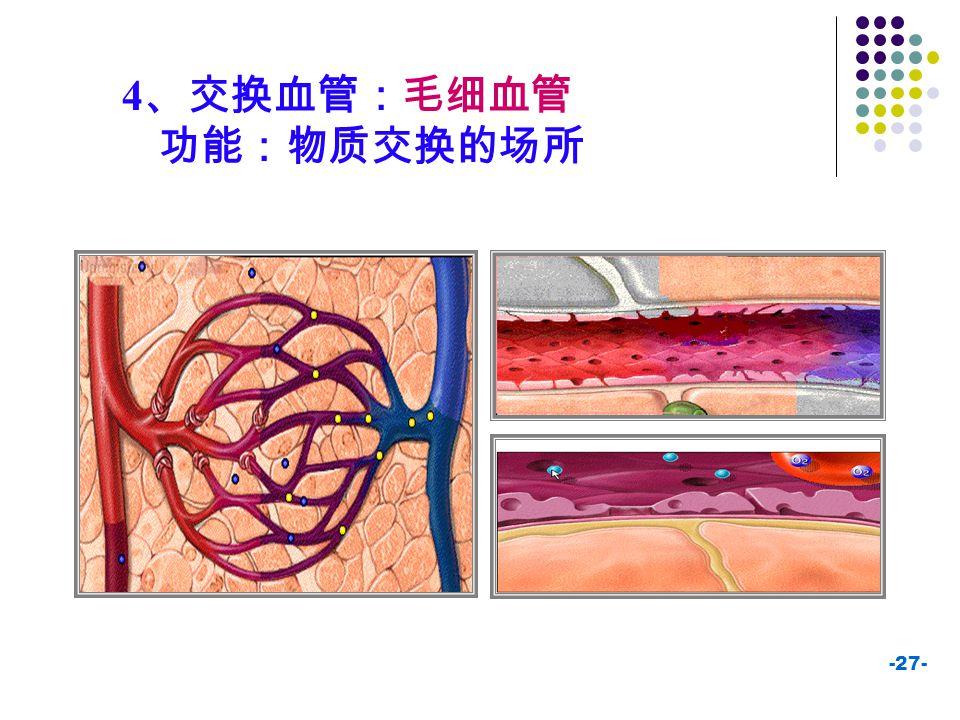 -27- 4 、交换血管:毛细血管 功能:物质交换的场所