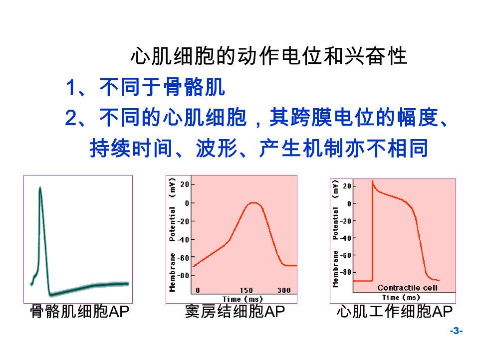 -4- 自律细胞的跨膜电位 自律细胞的特点: 4 期自动除极 ①随时间而递增 ②除极速度较 0 期的慢 ③不同自律细胞的 4 期 除极速度不一致