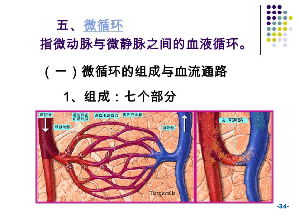 -34- 五、微循环微循环 指微动脉与微静脉之间的血液循环。 (一)微循环的组成与血流通路 1 、组成:七个部分