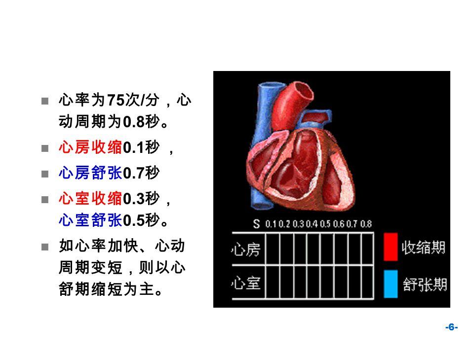 -6- 心率为 75 次 / 分,心 动周期为 0.8 秒。 心房收缩 0.1 秒 , 心房舒张 0.7 秒 心室收缩 0.3 秒, 心室舒张 0.5 秒。 如心率加快、心动 周期变短,则以心 舒期缩短为主。