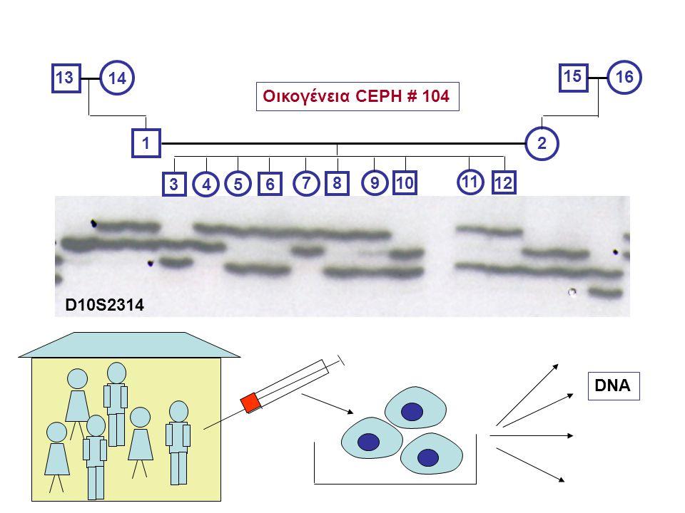12 3456 78910 11 12 13 14 15 16 Οικογένεια CEPH # 104 DNA D10S2314