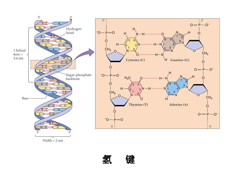 第 5 节 遗传密码和蛋白质的翻译