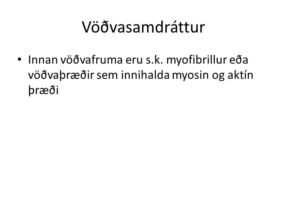 Vöðvasamdráttur Innan vöðvafruma eru s.k.