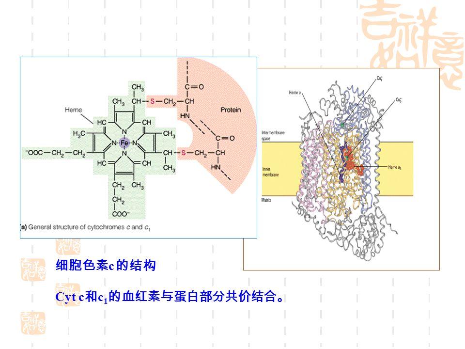 细胞色素 c 的结构 Cyt c 和 c 1 的血红素与蛋白部分共价结合。