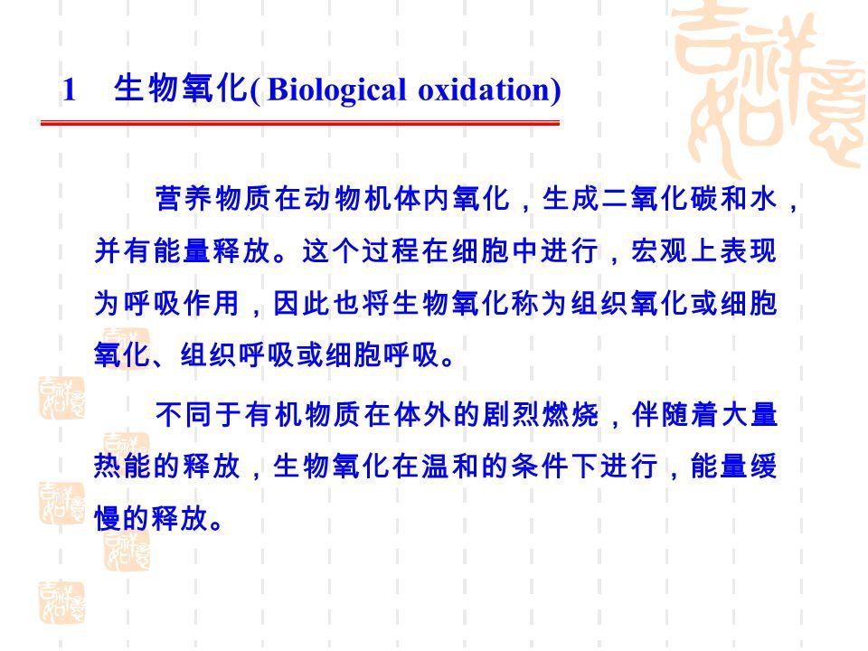 1 生物氧化 ( Biological oxidation) 营养物质在动物机体内氧化,生成二氧化碳和水, 并有能量释放。这个过程在细胞中进行,宏观上表现 为呼吸作用,因此也将生物氧化称为组织氧化或细胞 氧化、组织呼吸或细胞呼吸。 不同于有机物质在体外的剧烈燃烧,伴随着大量 热能的释放,生物氧化在温