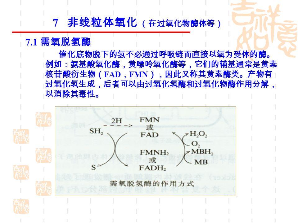 7 非线粒体氧化 (在过氧化物酶体等) 7.1 需氧脱氢酶 催化底物脱下的氢不必通过呼吸链而直接以氧为受体的酶。 例如:氨基酸氧化酶,黄嘌呤氧化酶等,它们的辅基通常是黄素 核苷酸衍生物( FAD , FMN ),因此又称其黄素酶类。产物有 过氧化氢生成,后者可以由过氧化氢酶和过氧化物酶作用分解, 以