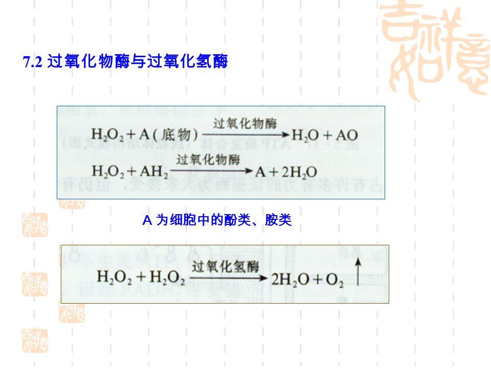 7.2 过氧化物酶与过氧化氢酶 A 为细胞中的酚类、胺类