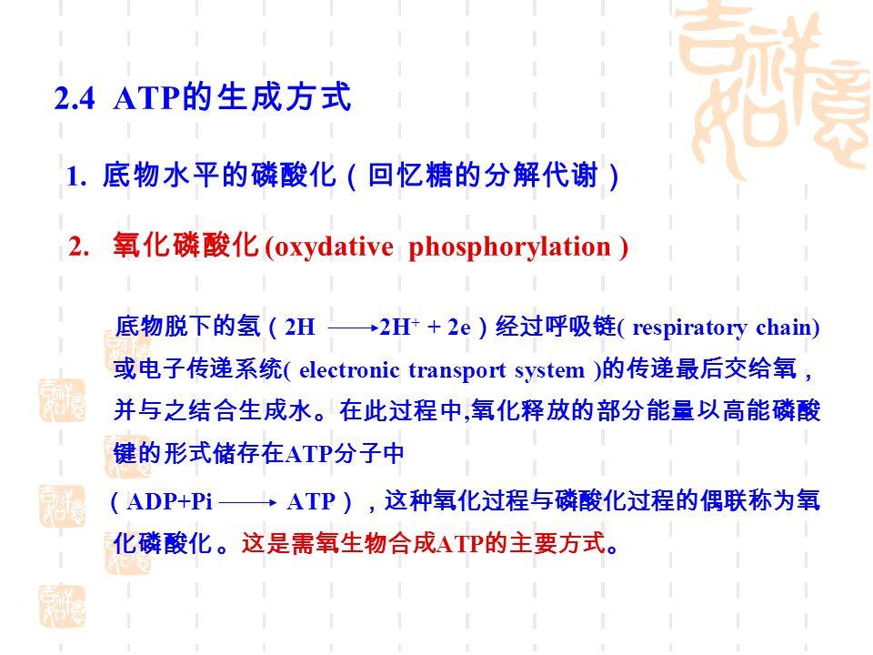 2.4 ATP 的生成方式 1. 底物水平的磷酸化(回忆糖的分解代谢) 2. 氧化磷酸化 (oxydative phosphorylation ) 底物脱下的氢( 2H 2H + + 2e )经过呼吸链 ( respiratory chain) 或电子传递系统 ( electronic transp