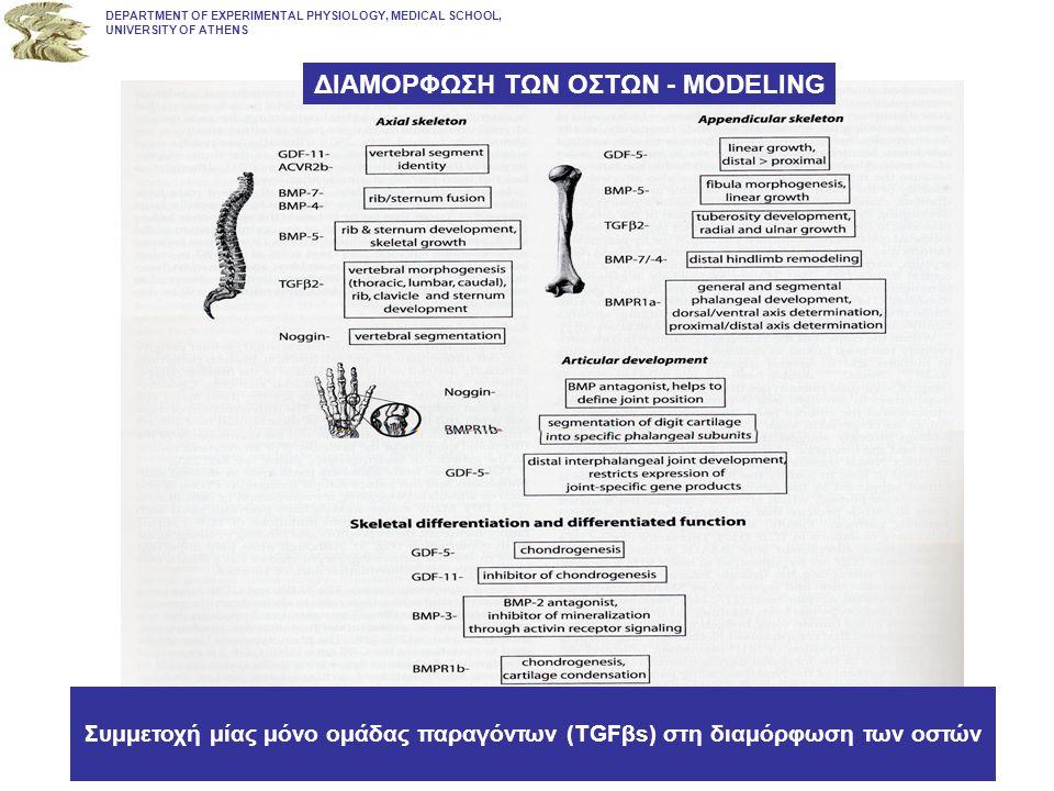 ΦλοιώδεςΦλοιώδες Οστούν –80% του σκελετού –20% ενεργό σε κύκλο αναδιαμόρφωση –Αντιστέκεται σε στρέψη και καμπύλωση –Μακριά οστά Σπογγώδες ΟστούνΣπογγώδες Οστούν –20% του σκελετού –80% ενεργό σε κύκλο αναδιαμόρφωση –Δυνάμεις συμπίεσης Δομή των Οστών DEPARTMENT OF EXPERIMENTAL PHYSIOLOGY, MEDICAL SCHOOL, UNIVERSITY OF ATHENS