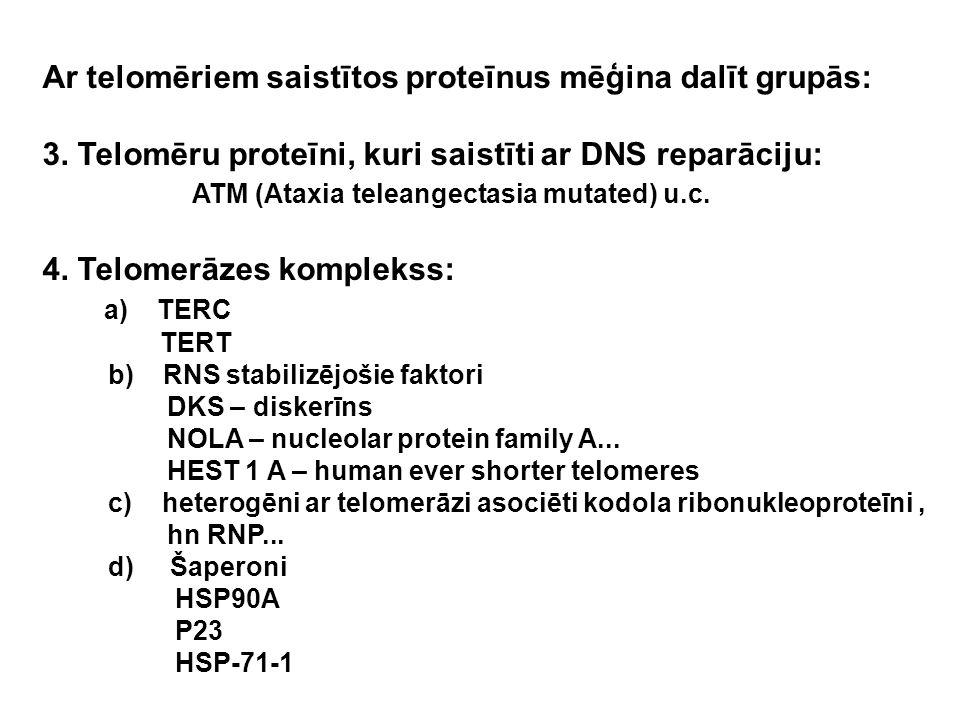 Ar telomēriem saistītos proteīnus mēģina dalīt grupās: 3. Telomēru proteīni, kuri saistīti ar DNS reparāciju: ATM (Ataxia teleangectasia mutated) u.c.
