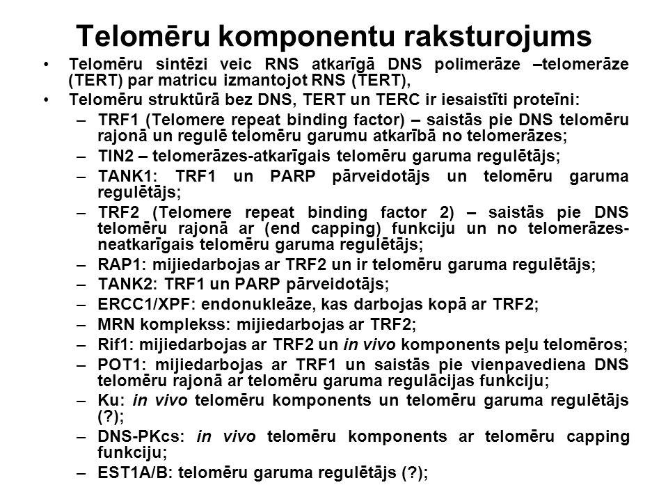 Telomēru komponentu raksturojums Telomēru sintēzi veic RNS atkarīgā DNS polimerāze –telomerāze (TERT) par matricu izmantojot RNS (TERT), Telomēru stru