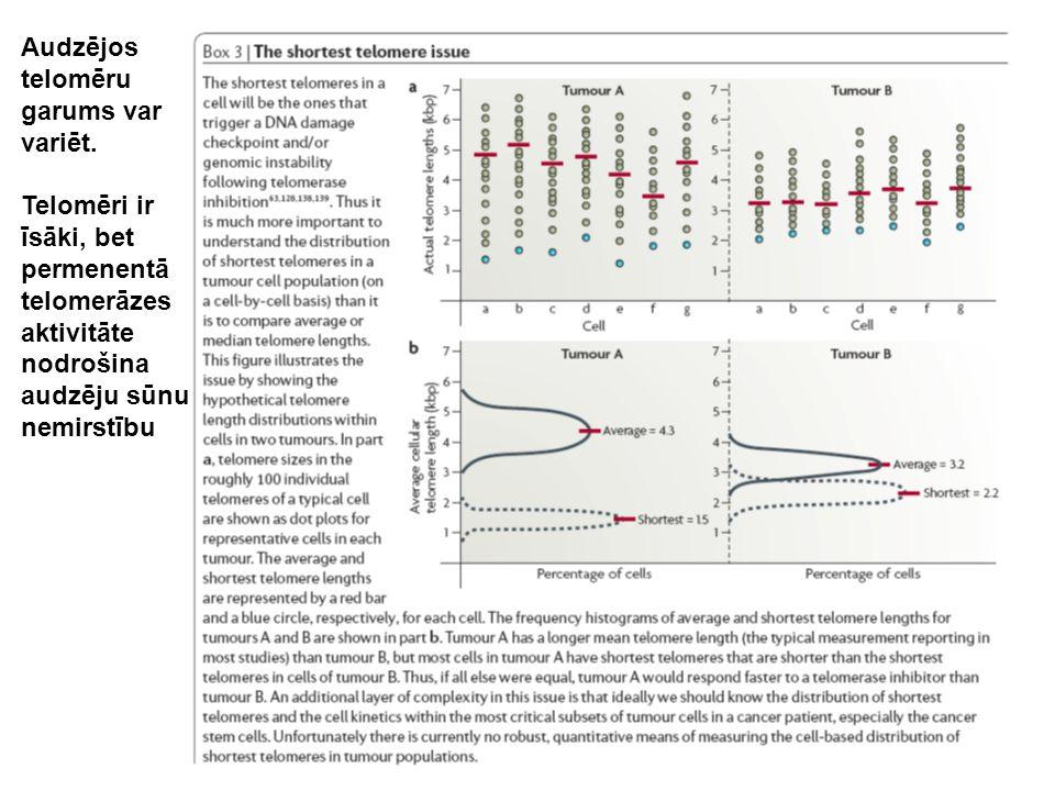 Audzējos telomēru garums var variēt. Telomēri ir īsāki, bet permenentā telomerāzes aktivitāte nodrošina audzēju sūnu nemirstību