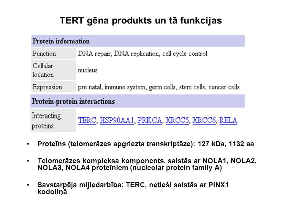 Proteīns (telomerāzes apgriezta transkriptāze): 127 kDa, 1132 aa Telomerāzes kompleksa komponents, saistās ar NOLA1, NOLA2, NOLA3, NOLA4 proteīniem (n