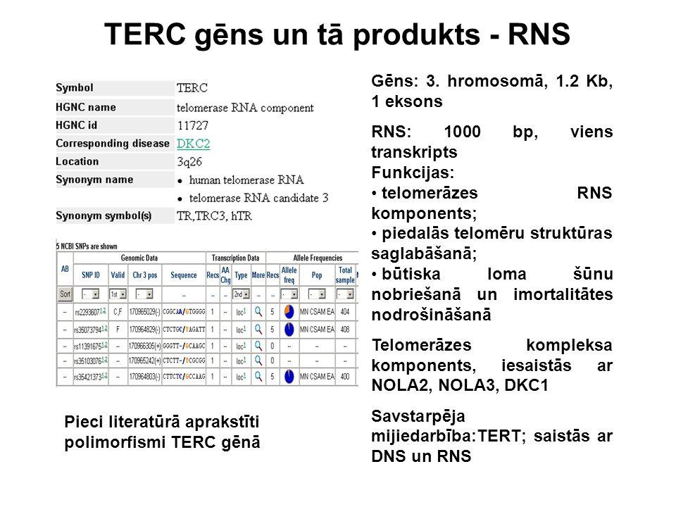 TERC gēns un tā produkts - RNS Gēns: 3. hromosomā, 1.2 Kb, 1 eksons RNS: 1000 bp, viens transkripts Funkcijas: telomerāzes RNS komponents; piedalās te