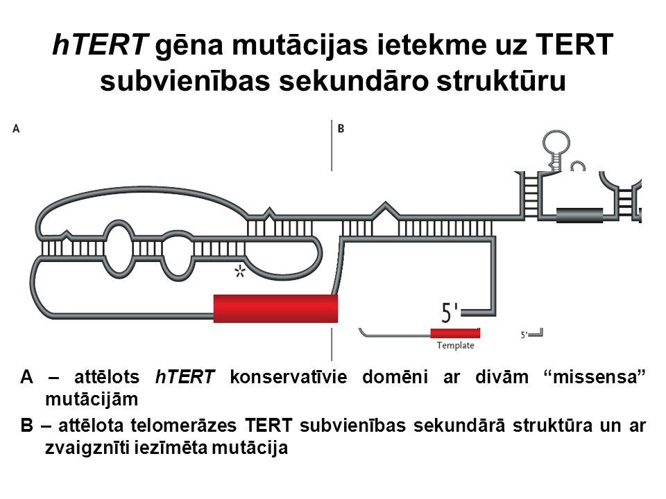 """hTERT gēna mutācijas ietekme uz TERT subvienības sekundāro struktūru A – attēlots hTERT konservatīvie domēni ar divām """"missensa"""" mutācijām B – attēlot"""