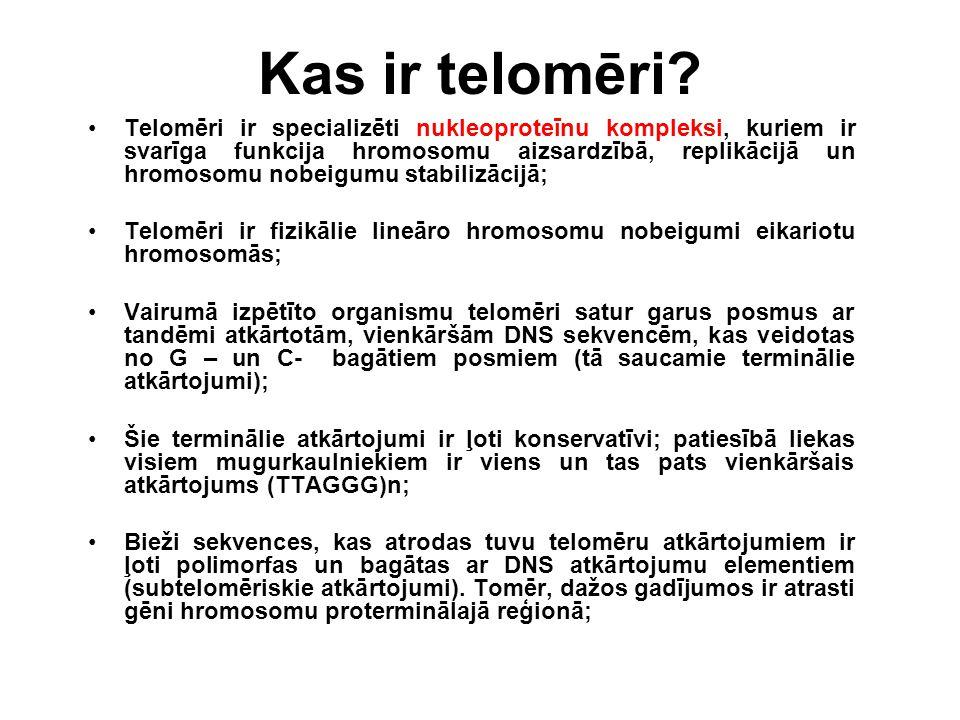 Kas ir telomēri? Telomēri ir specializēti nukleoproteīnu kompleksi, kuriem ir svarīga funkcija hromosomu aizsardzībā, replikācijā un hromosomu nobeigu